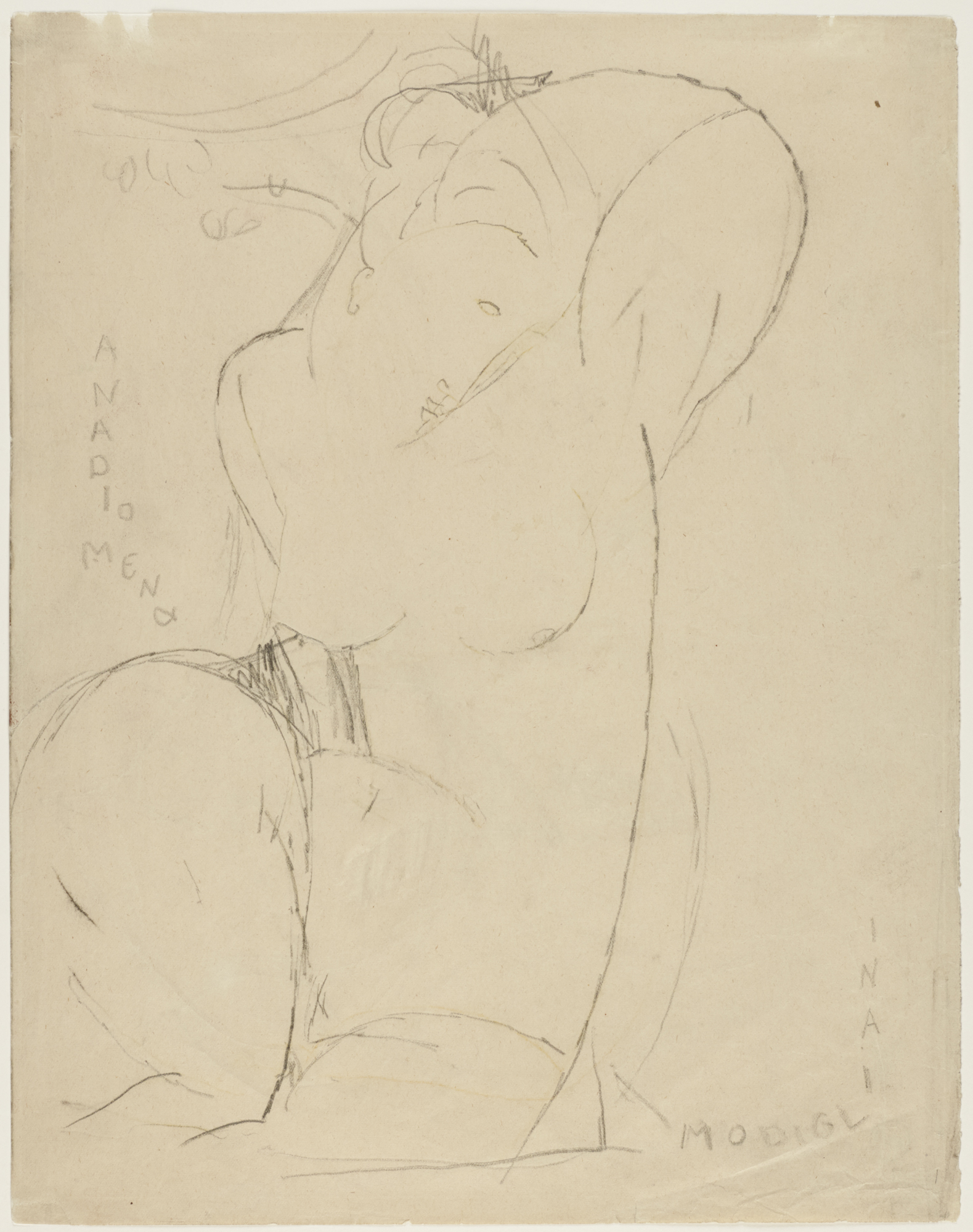 Amedeo Modigliani (Italian, 1884–1920), Anadiomena, ca. 1914–15. Graphite with traces of yellow pencil on thin light tan wove paper, 33.9 x 26.5 cm. Bequest of Dan Fellows Platt, Class of 1895 (x1948-390)